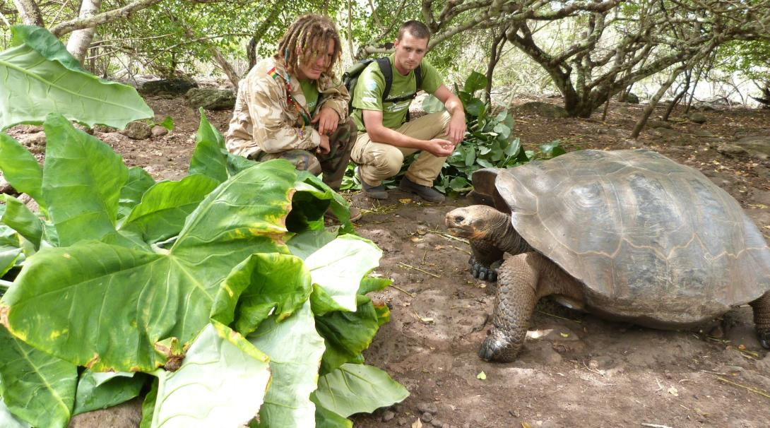 Volunteers observe a Giant Tortoise at a breeding centre in the Galapagos Islands.